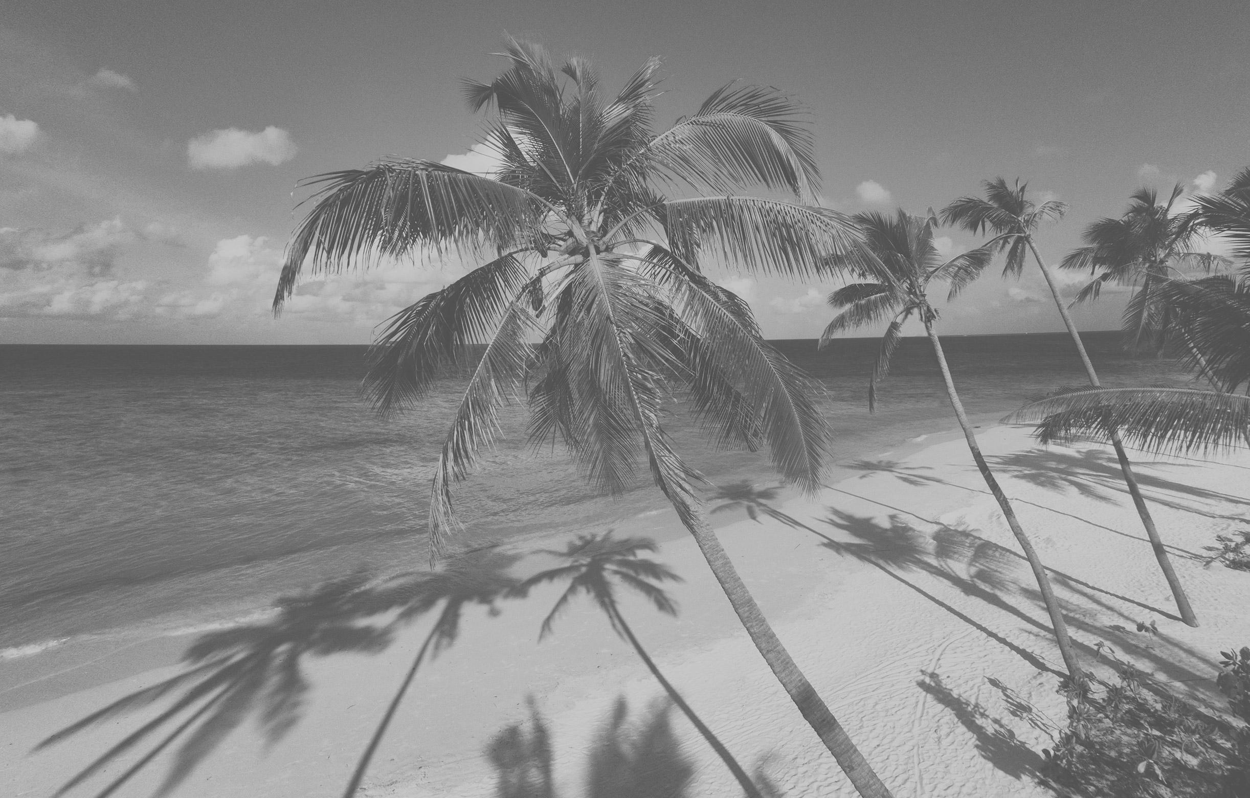 Sandstrand mit Palmen im Milaidhoo Island