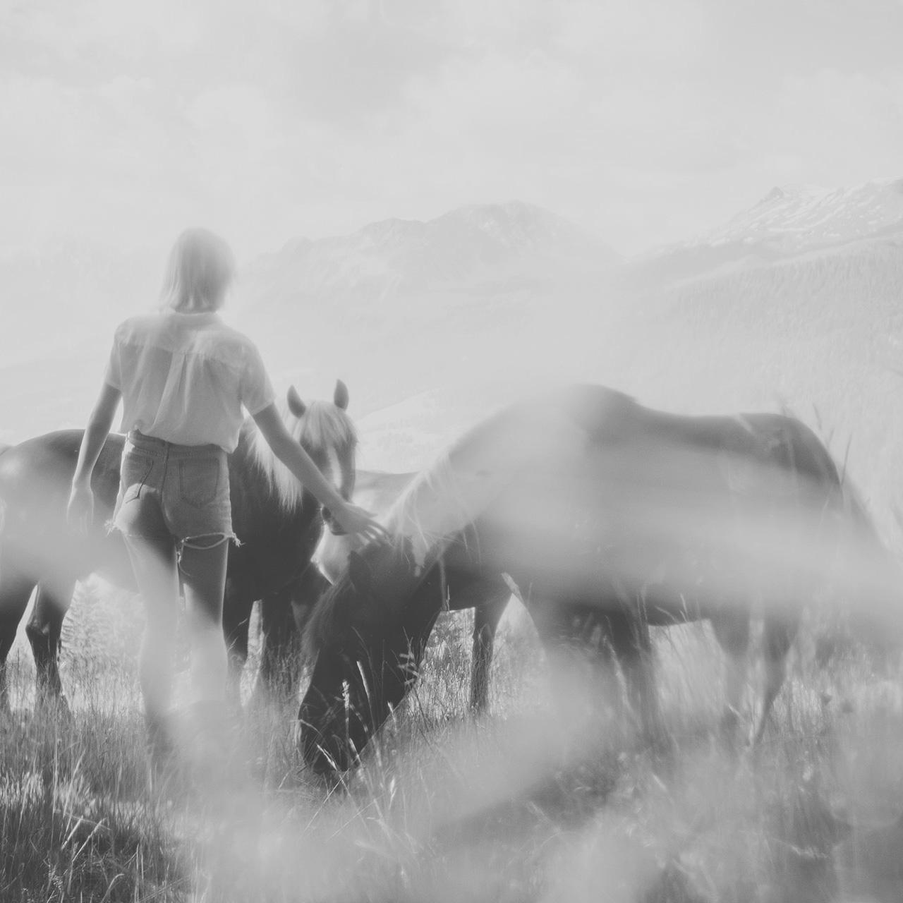 Pferde auf einer Almwiese des Guarda Val