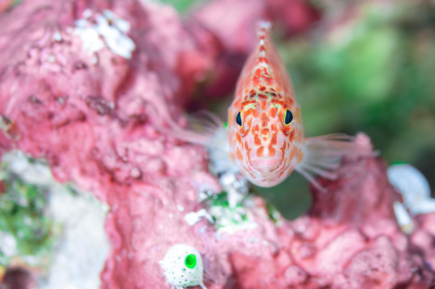 Nahaufnahmen eines Fischs am Korallenriff